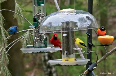 birds-on-feeders-Melissa-Penta-570x375